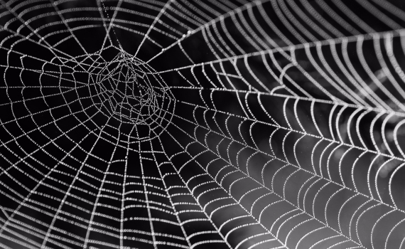 A spider web, meant to symbolize a network
